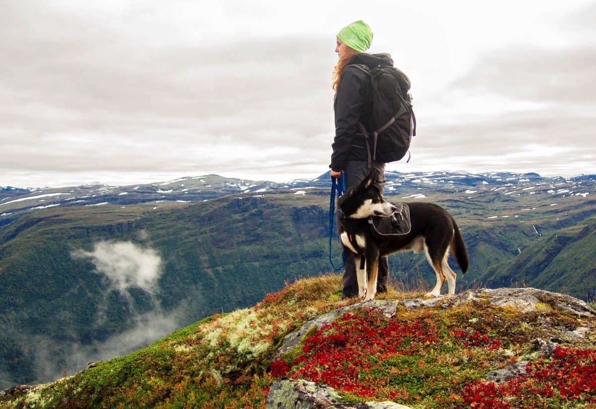 How to backpacking with dogs