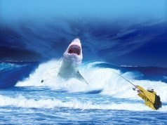 Surf Fishing for Shark