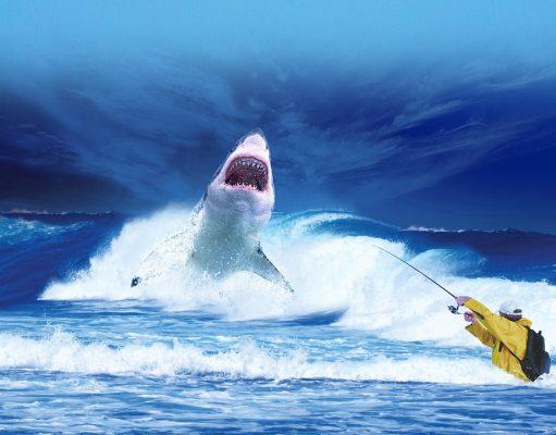 Surf Fishing for Shark