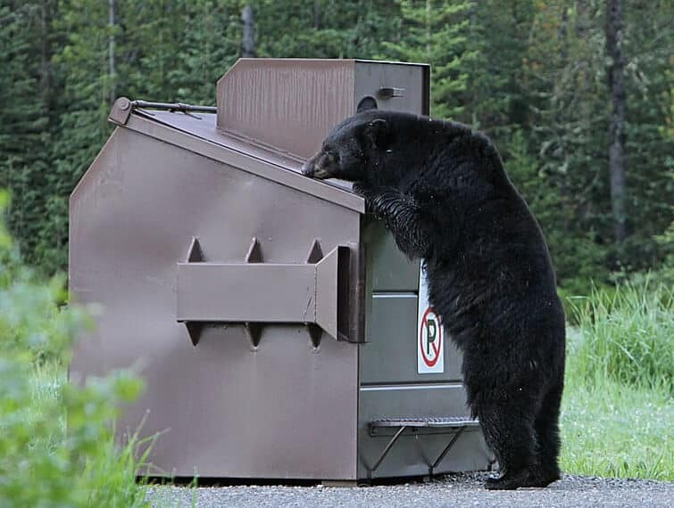 how to keep bears away
