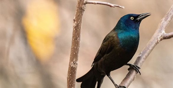 4 Amazing Health Benefits Of Birding That You Should Know About