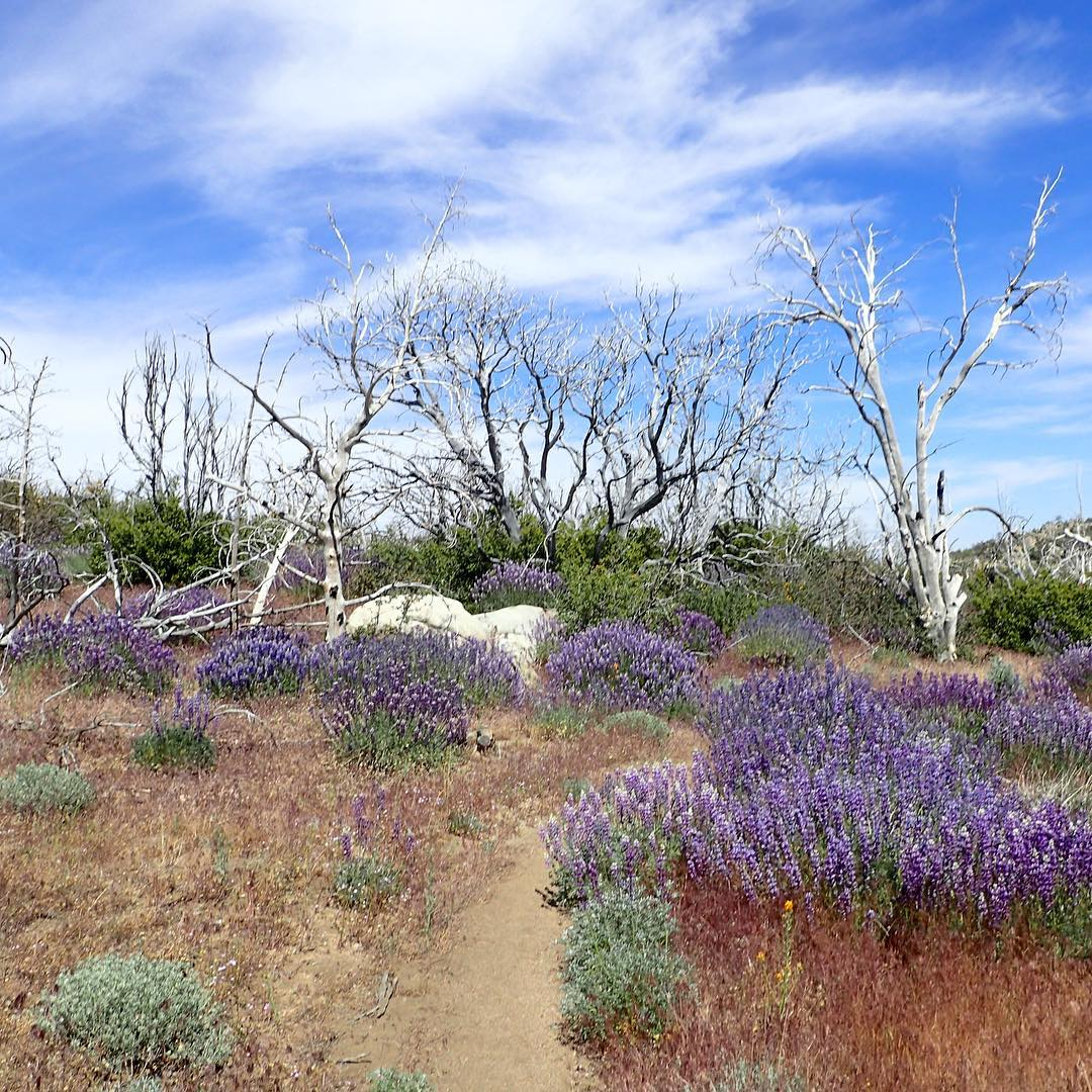 6 Great Summer Hikes in the United States -Pacific Crest Trail