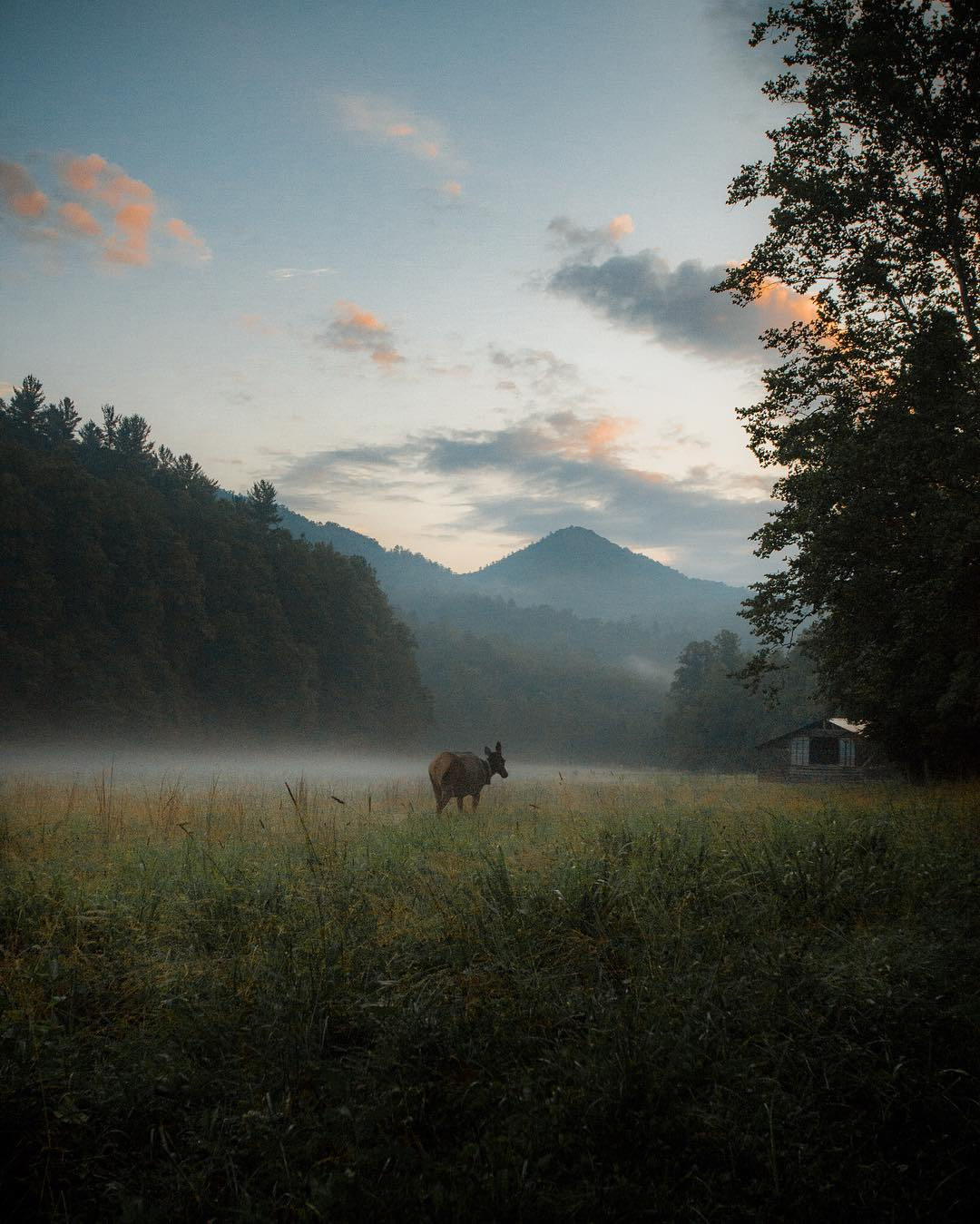 Top 7 National Parks in the USA - Great Smoky Mountains National Park