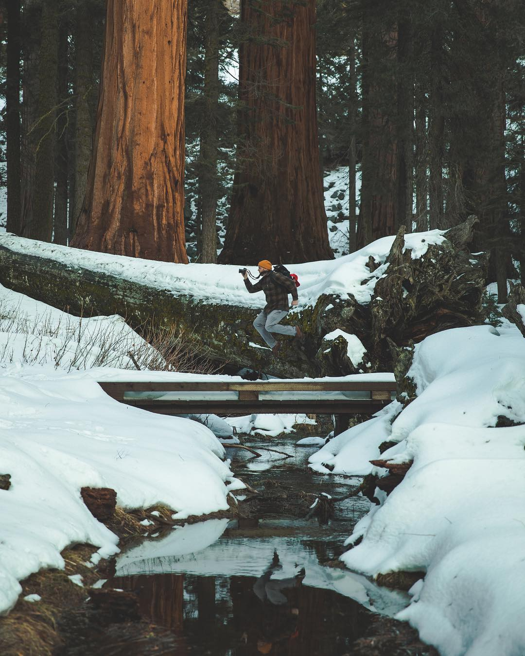 Top 7 National Parks in the USA - Sequoia National Park